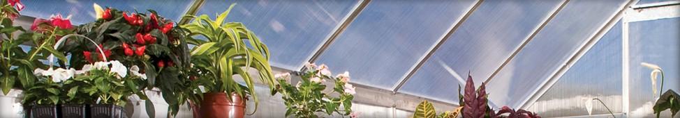 Essence Greenhouse
